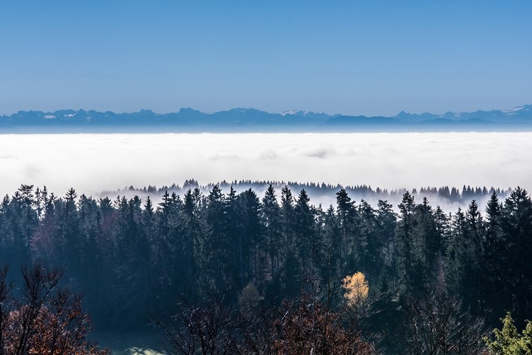 Schluchtensteig Schwarzwald Alpensicht Panoramatafel Horbach
