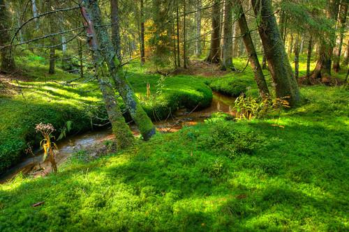 Mitten im Wald/ Flusslauf © Erich Spiegelhalter/Schwarzwald Tourismus