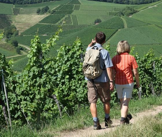 Weinwandern ©  S. Hotz / STG