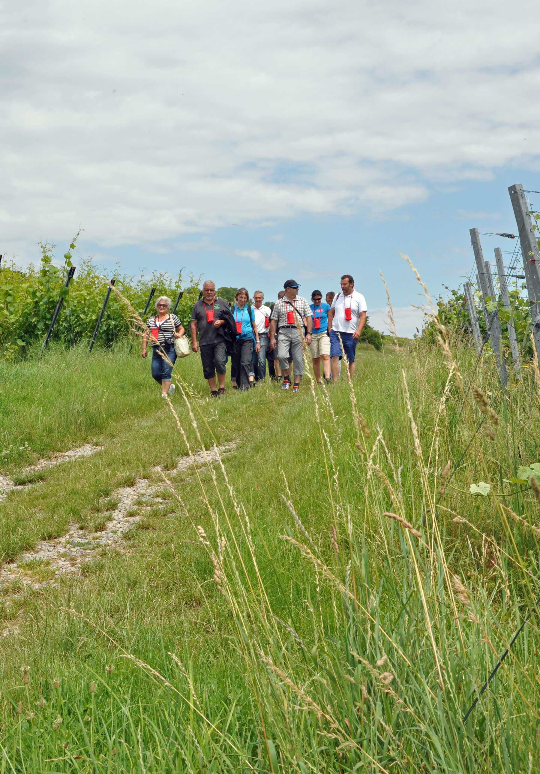 Erkennungszeichen roter Stoffbeutel: Jens Rüdiger (rechts) führt die Gruppe durch die Weinberge