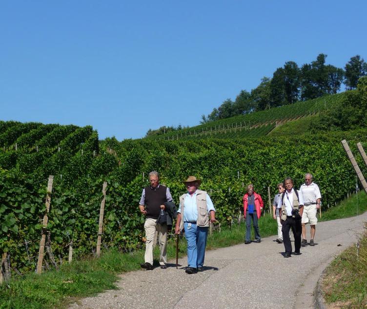 Pauschale Weingenuss an den Hängen des Schwarzwaldes