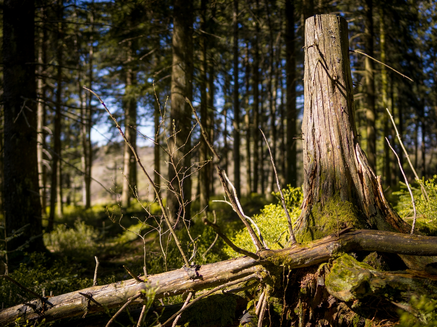 Nationalpark Schwarzwald