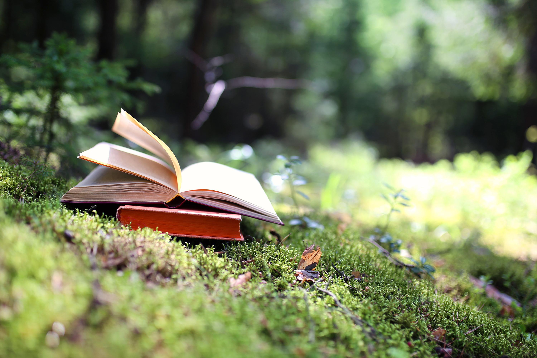 Buch im Schwarzwald