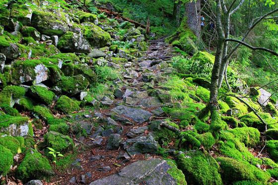 Natur am Schauinsland