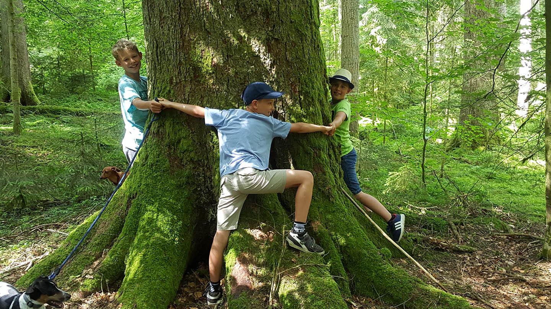 Wir lieben den Wald und seine Tannenriesen