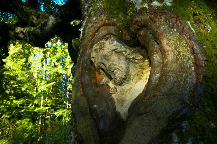 """Der """"Balzer Herrgott"""" oder """"Winkelherrgott"""" ist eine in eine Weidbuche eingewachsene steinerne Christusfigur zwischen Wildgutach und Neukirch-Fallengrund."""