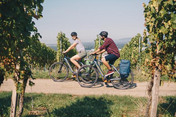 Badischer Weinradweg Freiburg