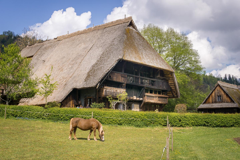 Vogtsbauernhof mit Pferd