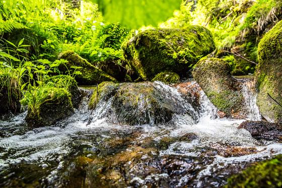 Bachlauf im Schwarzwald