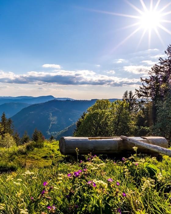 Feldberg Wanderung bei wunderschönem, sonnigen Wetter