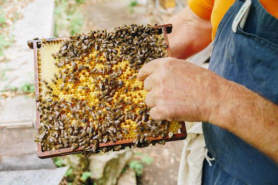Waben Bienen