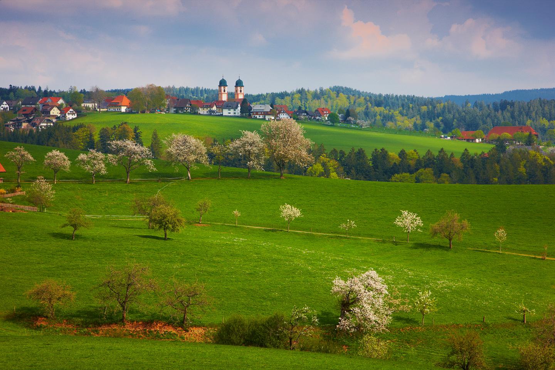 Blüte bei St. Märgen © Erich Spiegelhalter/Schwarzwald Tourismus