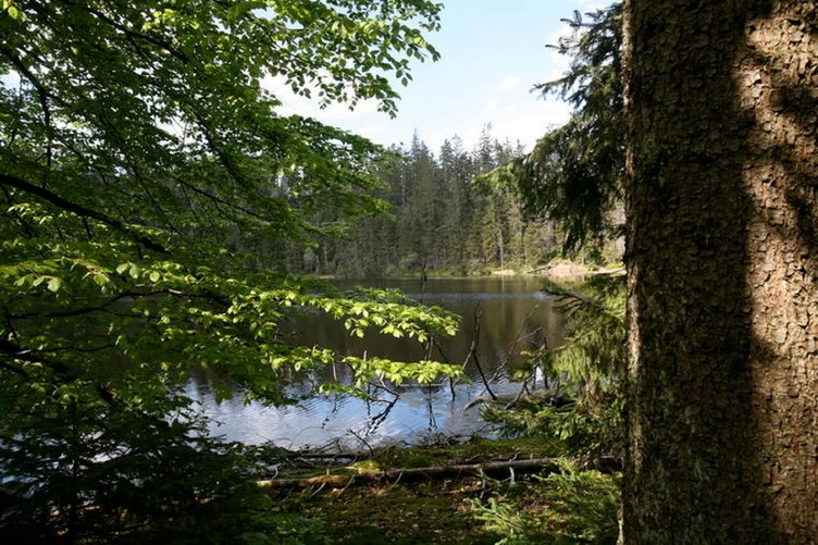 Natur pur und jede Menge tolle Ein- und Ausblicke erwarten Sie