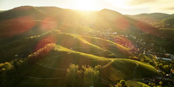 Reblandschaft bei Sasbachwalden von Alde Gott