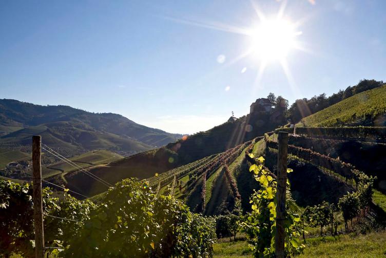 Weinlandschaft-Ortenau