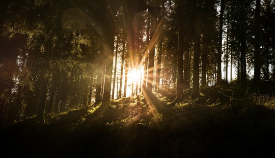 Nationalpark - Sonne © Chris Keller / Schwarzwald Tourismus