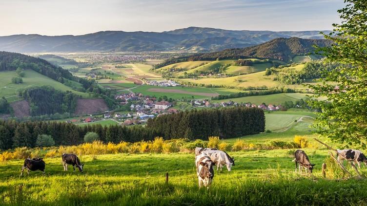 Blick ins Dreisamtal, oberhalb von Oberried