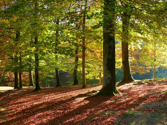 Wald_im_Herbst © Michael Sauer / Schwarzwald Tourismus