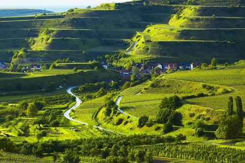 Weinterrassen am Kaiserstuhl