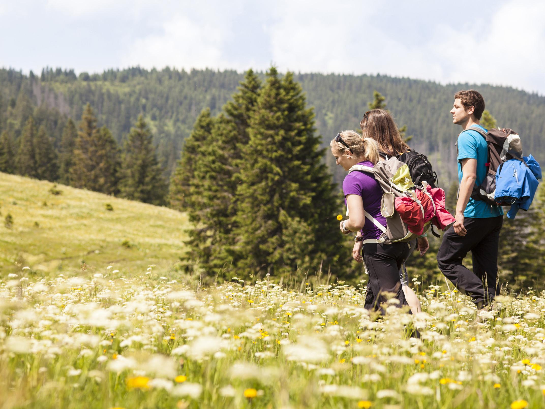 Wander-Trio am Feldberg - Blumenwiese