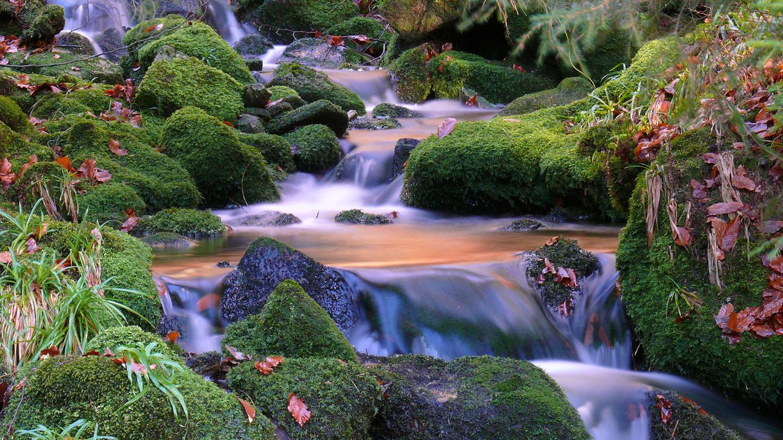 Bach_Wasserfall_Kaskaden © Michael Sauer / Schwarzwald Tourismus