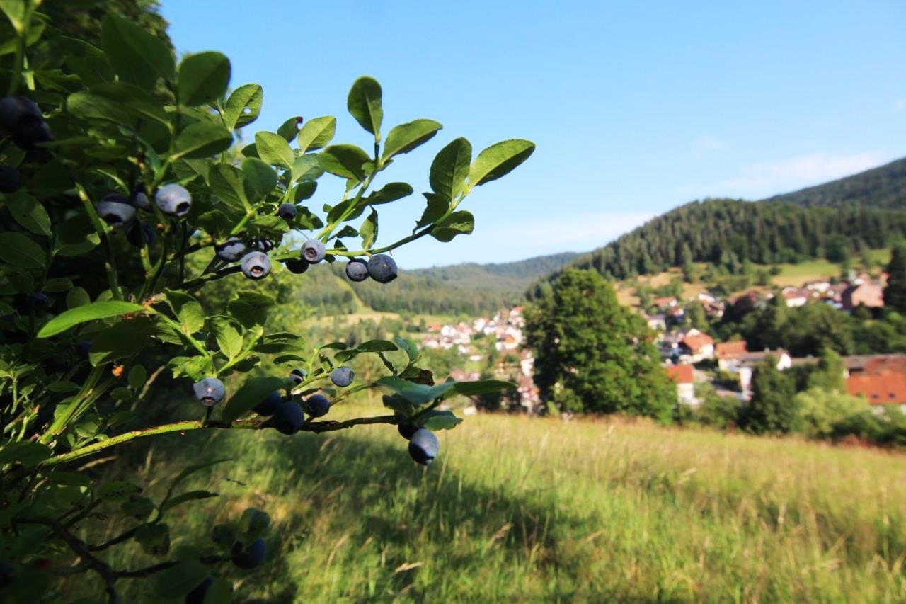 Heidelbeerdorf Enzklösterle