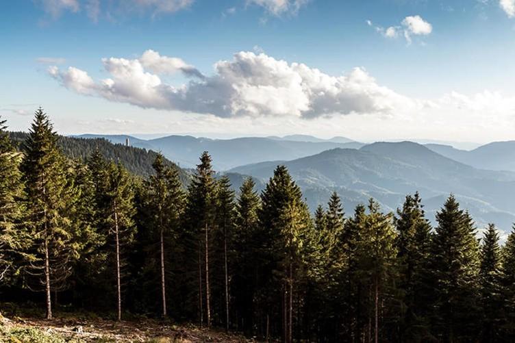 7 Tage auf dem Renchtalsteig über Berg und Tal  Angebot