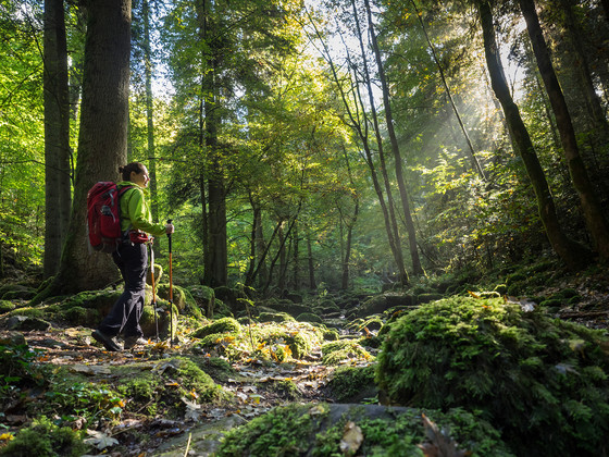 Wanderin - Hiking im Wald