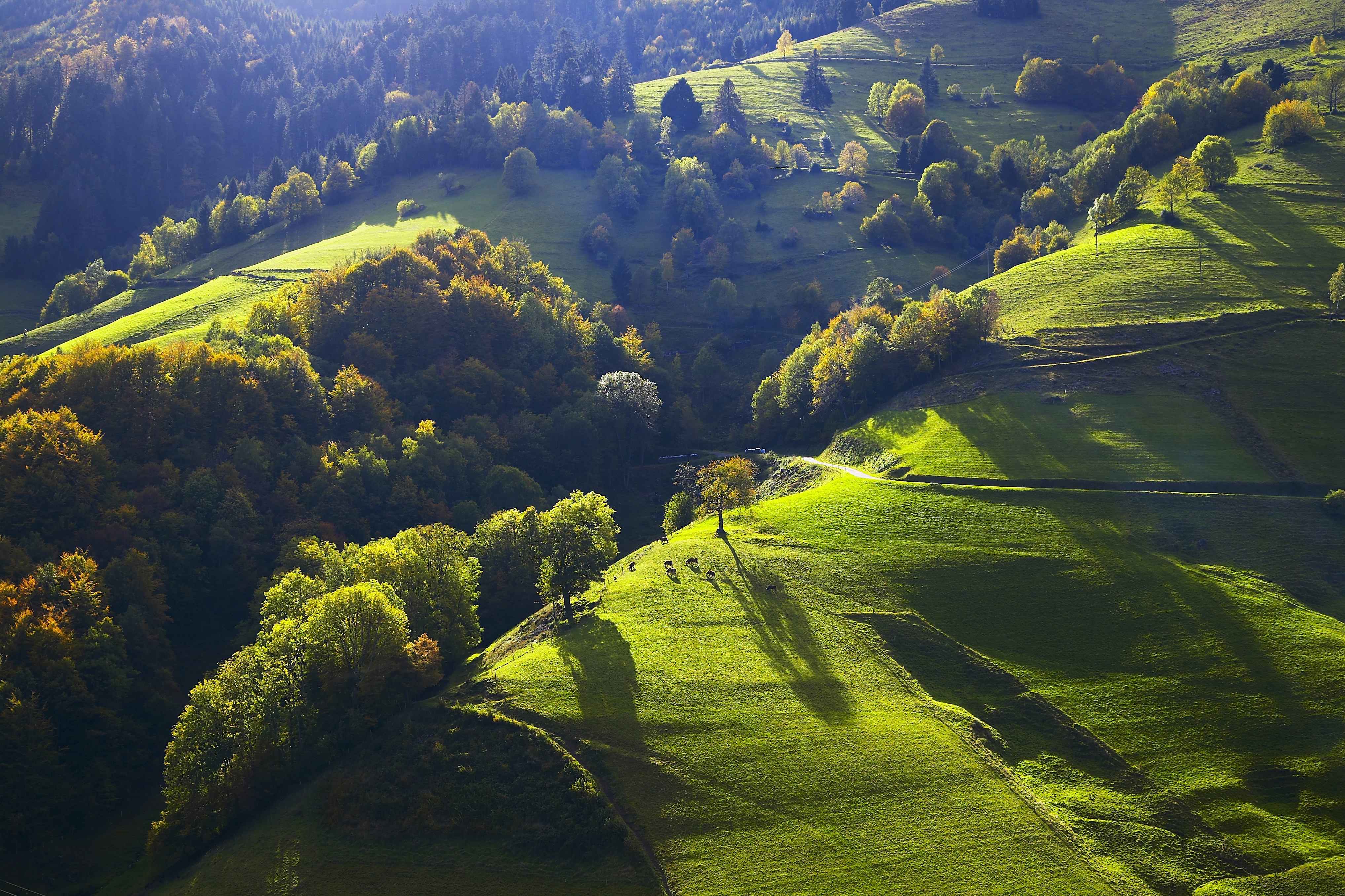 Münstertal Talweiden