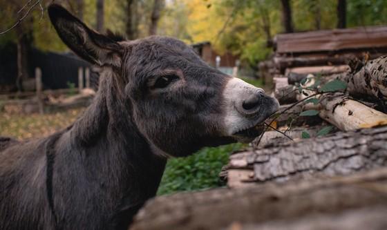 Esel & Wildkräuterwanderung, Hotzenwald