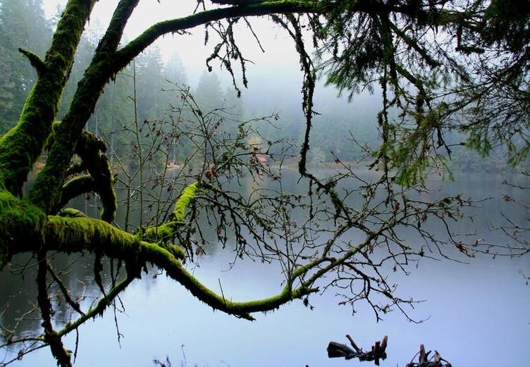 Ein bemooster Zweig ragt über den nebligen Glaswaldsee