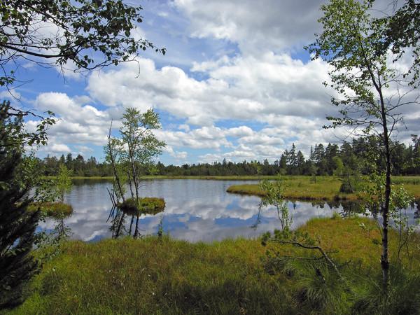 Kaltenbronn Wildsee
