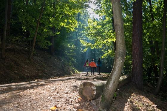 Wanderwochenende, Gasthof Zur Traube