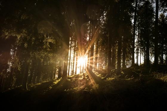 Nationalpark - Sonne
