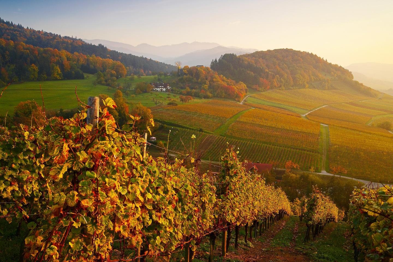 Staufen Grunern im Herbst © Erich Spiegelhalter/Schwarzwald Tourismus